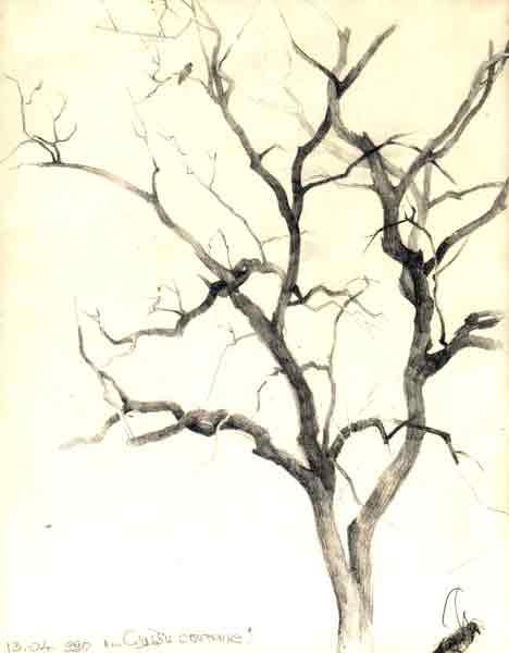 И мясников рисунок дерева
